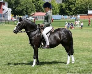 Llanfairbryn Delwyn n- Stunning experienced Childs Pony