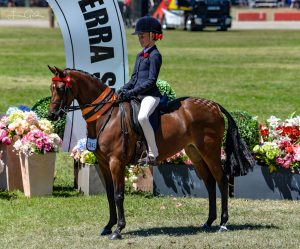 HOTY and Royal Show Winning Small Pony
