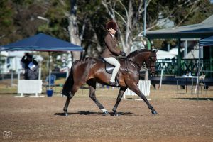 Argyl Secret Gem - Large Hunter Pony