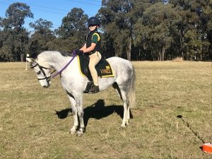 Gorgeous Project Pony  - Henson Park Silver sky