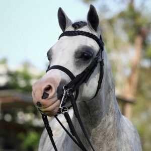 Stunning Hunter Pony - A Show Family Dream