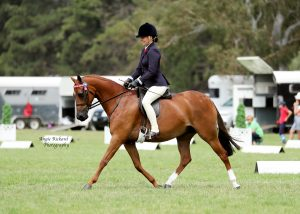 Ultimate All-round Pony - Deeplake Regal Presence