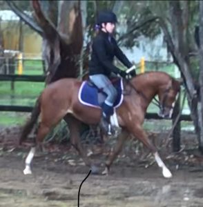 Yartarla Park Centrepiece - Large Pony