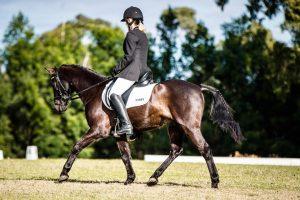 Briefield in the Dark -   Riding Pony Gelding