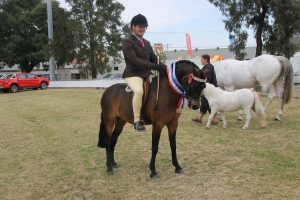 Super Small Show Hunter Pony