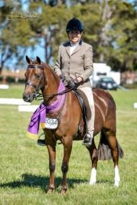 Quality Liver Chestnut Pony Mare