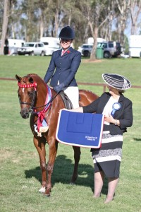 Perfect Allrounder - Suitable 2nd Pony