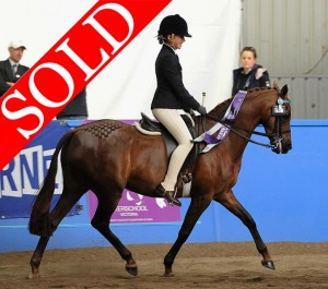 SOLD!!! - Donlea In the Moment