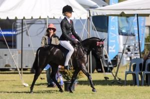 Black RP Gelding - Small Pony
