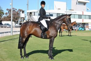 Beautiful Show Hack - Price Reduced