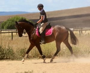 Reliable Small Hack & All rounder - Price reduced