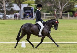 Bellevale Hearts a Quiver- the Ultimate Child's Pony (GNQ)