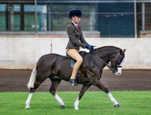Competitive Small Hunter Pony - Wyann Safari