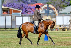 Astral Royal Performance - Large Show Hunter Pony