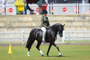 Vitae Lampadae Serendipity - Amazing Hunter Pony