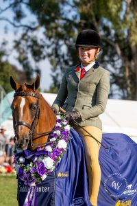 Exquisite Large Show Hunter Pony (NZ)