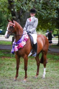Greenmoor Dolcetto - Small Show Hack (NZ)