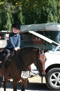 Successful Dressage / Show Hunter Pony