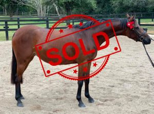 SOLD!! - Lovely Bay Mare
