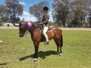 Bevanlee Kensington - Large Show Hunter Pony