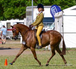 Mirinda Matinee Idol - Champion Large Pony