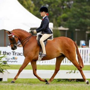 Genuine Child's Large Pony - 13.1 3/4hh