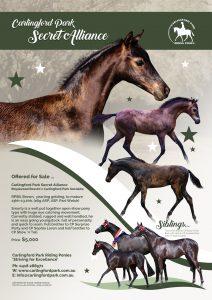 Carlingford Park Secret Alliance - Royal Quality Large Pony