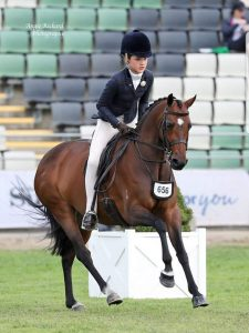 Large Show Hunter Pony - Qualified GN & Southern Cross 2020
