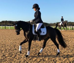 Oro Verano - German Riding Pony x Welsh/Riding Pony