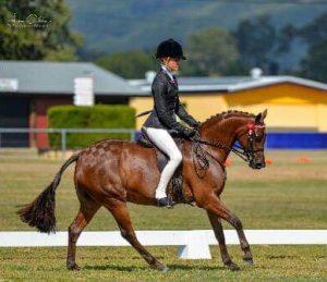 Bamborough Ella - Large Show or Dressage Pony