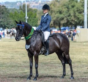 Small Galloway - Qualified Grand Nationals 2019