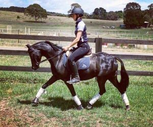 SE Bentley - Royal Quality Pony