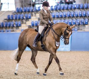 I Love Lucy  - Warmblood Small Show Hunter Hack