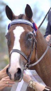 Burasari - Royal Novice Champion. Price Reduced