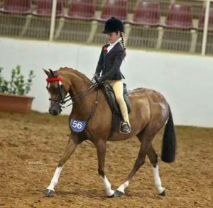 Beckworth Royal Music - Small Open Pony