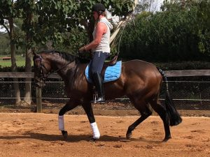 Quality Young Thoroughbred Mare