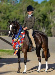 Anjara Park Euphoria - NSW EA HOTY Champion