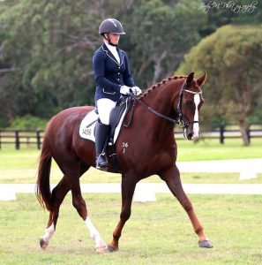Simply Stunning Warmblood - 6yo Gelding