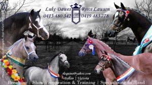 RL Equine - Training, Showing & Breaking.