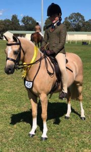 Gordon Park Peter Pan - Small Hunter Pony