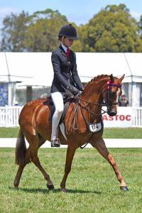 Mandaley King George - Open Large Pony