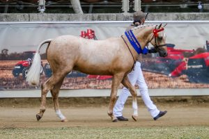 Jemiller Park Moscato - to mature Large Pony