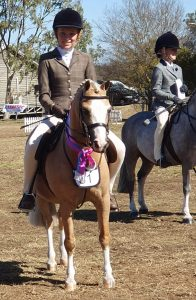 Bellingara Nirvana - Small Show Hunter Pony