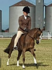 Tibooburra Mystery - Small Show Hunter Pony