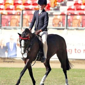Charming 12.2 Pony Gelding