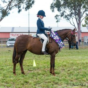 Urgent Sale - National Quality Galloway Mare