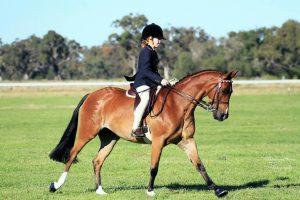 Kolbeach Honours - Large Pony