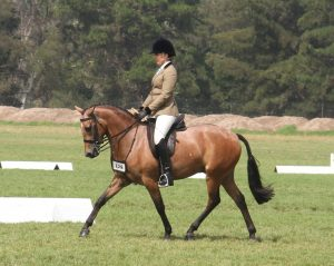 Hillen Confidential - Small Show Hunter Galloway