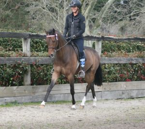 Malibu Park Top This - Large Pony Gelding