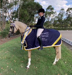 SOLD!! - Quality Show & Dressage Mount